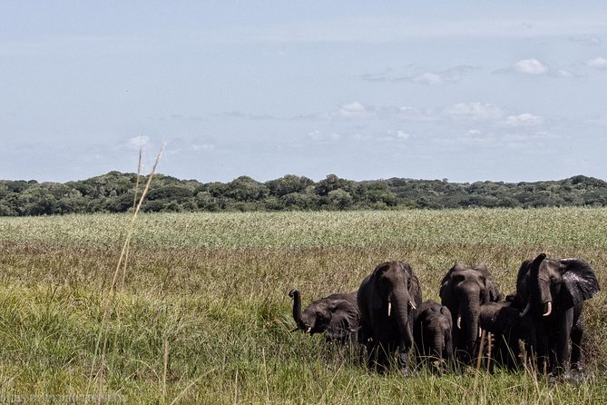 3-Day Guided Tour: Maputo Special Reserve