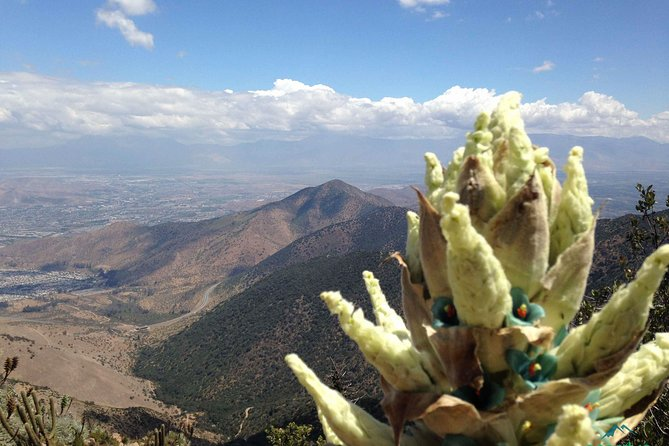 Half day Cerro Manquehue guided hiking tour - Iconic mountain of Santiago, Chile