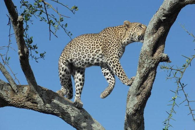 4 Days Tanzania Luxury Safaris