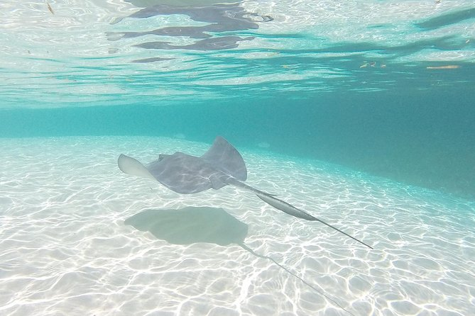 Miami/Fort Lauderdale: Bimini Bahamas Day Trip by Ferry