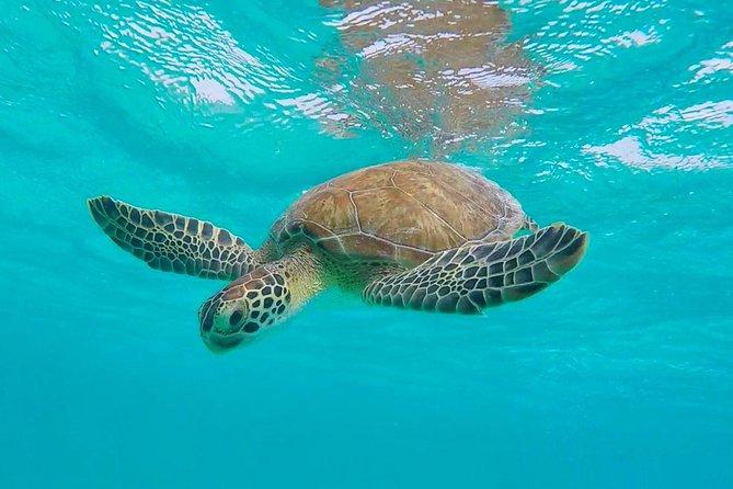 SoloBon Private Sail & Snorkel Safari