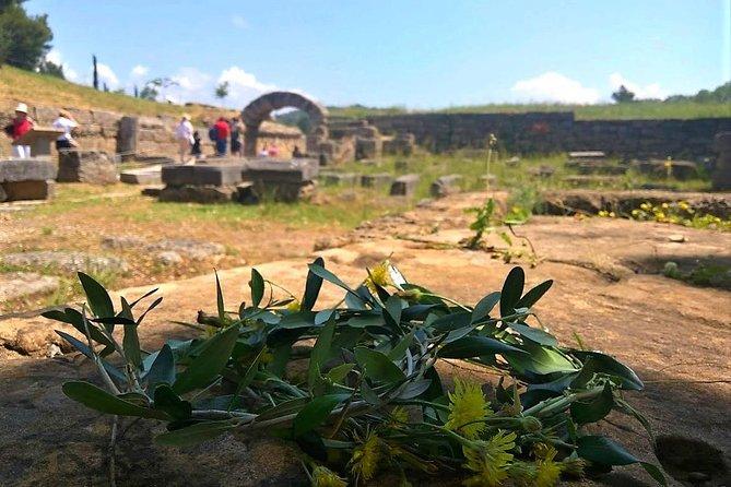 Katakolon Shore Excursion: Ancient Olympia Plus Honey Farm & Olive Oil Tasting