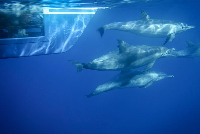 Dana Point Whale Watching and Dolphin Watching Eco-Safari