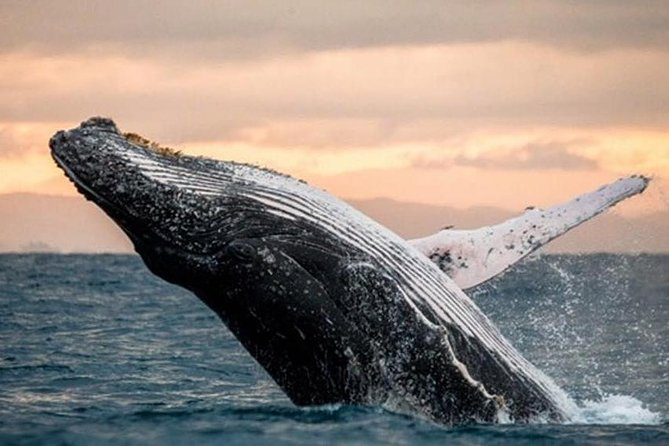Whale Watch, Dolphins, Turtles and Sightseeing Cruise (winter only)