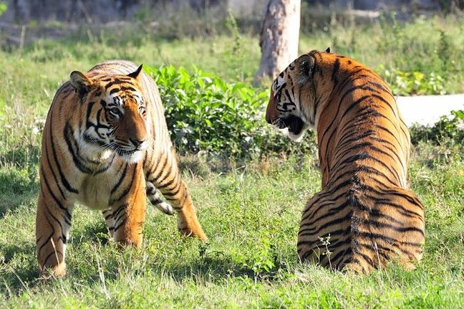 5-Star Hotel Package: 4-Day Ranthambore Tiger Tour from Delhi to Jaipur and Agra
