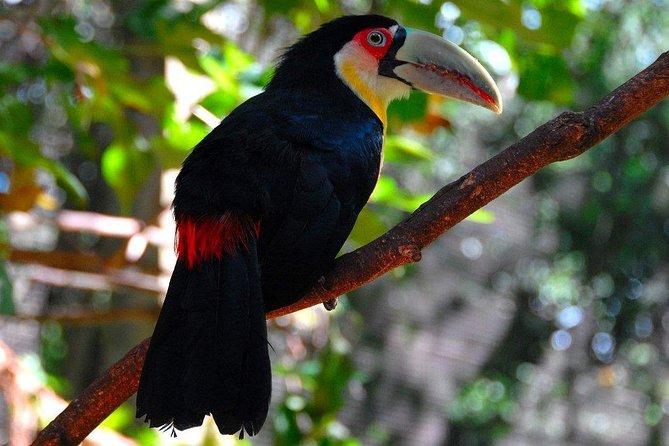 Private Full-Day Tour to Iguazu Falls National Park