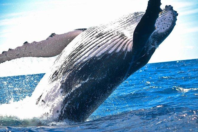 Kawaihae Whale Watch - Guaranteed