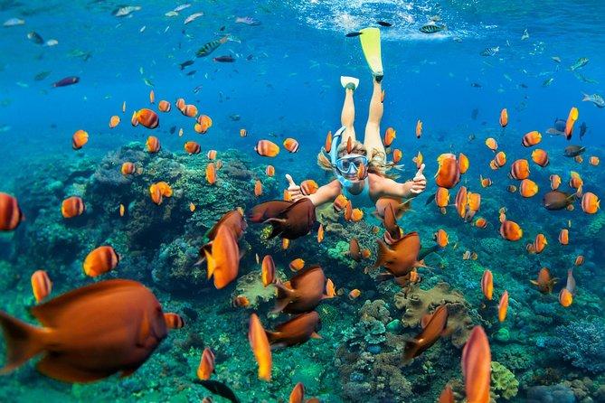 Snorkel & Swim with Turtles. Semi Private Tour to Buck Island & Honeymoon Beach