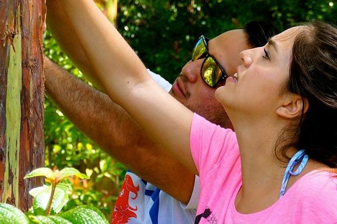 Deluxe Halfway to Hana: Private Tour from Kahului