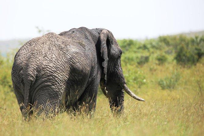 4 Days 3 Nights Safari (Ngorongoro & Serengeti)