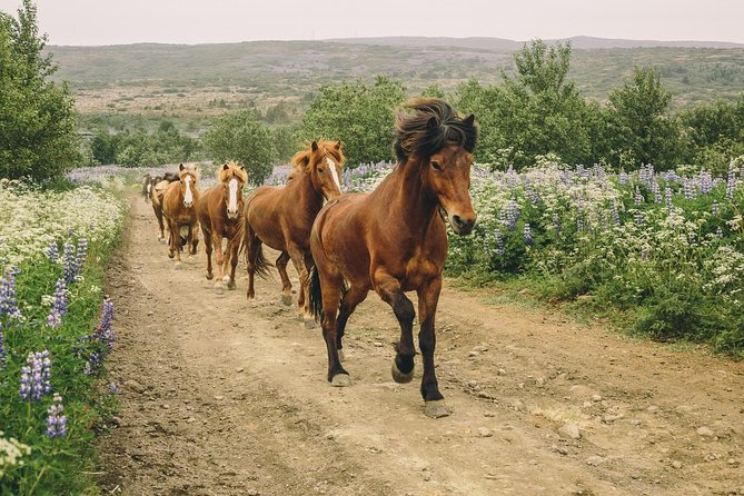Icelandic Horse & Stable Experience from Reykjavik