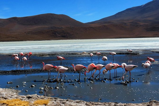 Uyuni Salt Flats _ 3 Days/2Nights _ Shared Tour_English Speaking Guide