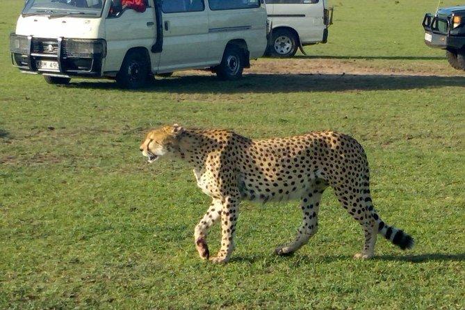 3Days 2nights Masai Mara group joining safari