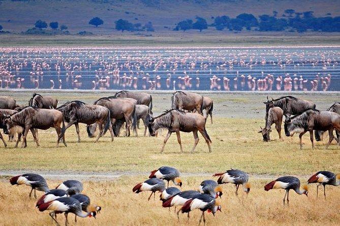 4 days Join Group safari in Serengeti, Ngorongoro and Lake Manyara National Park