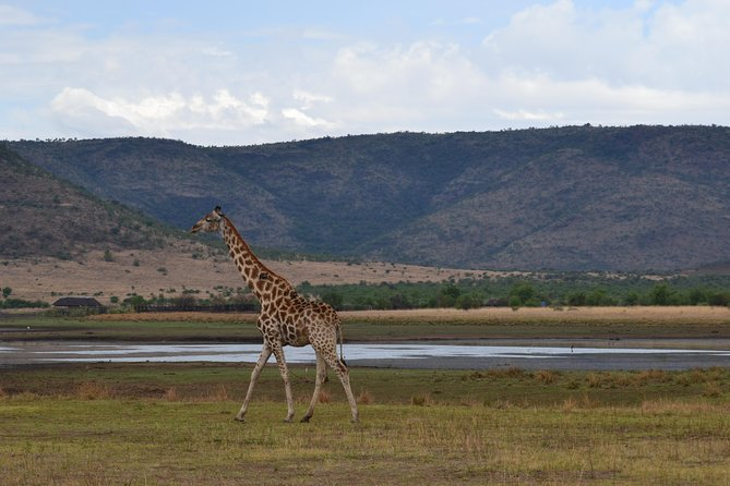 Pilanesberg National Park Full-Day Tour from Johannesburg