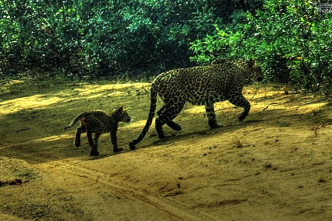 All inclusive Private safari at Wilpattu National park from Negombo
