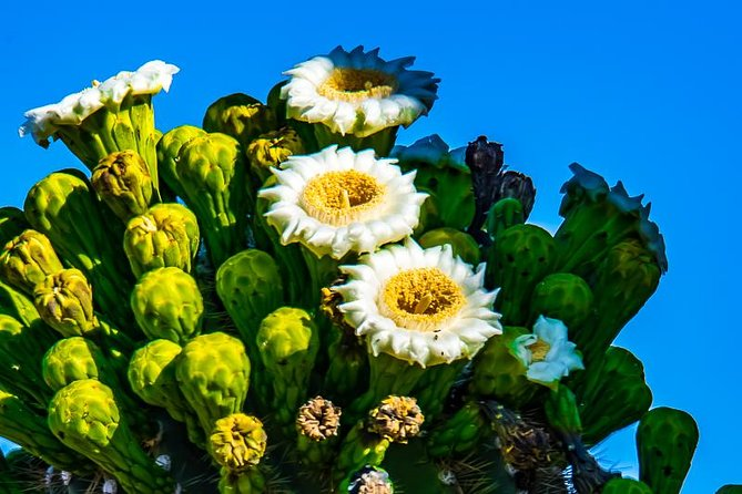 4-Hour Sonoran Desert Morning Photography Workshop