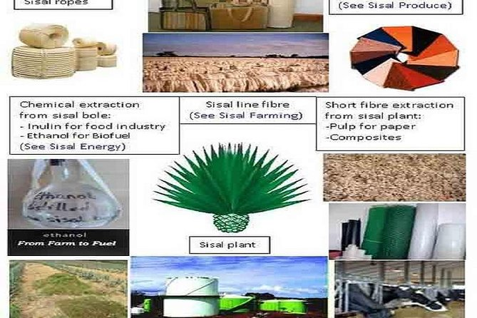 Visit Sisal Plantations & Industrial Processing Plant-Full Day from Tanga City