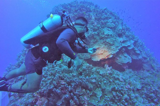 Deep Wreck Dive and Shallow Reef Dive - 2 Tanks