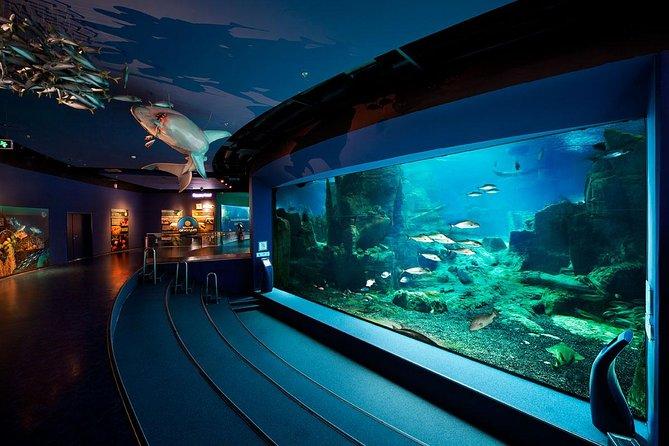 Aquarium Istanbul Admission & Lunch & Aqua Florya Shopping