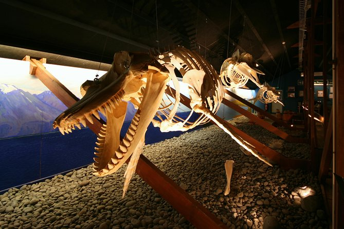 Skip the Line: Húsavík Whale Museum Admission Ticket