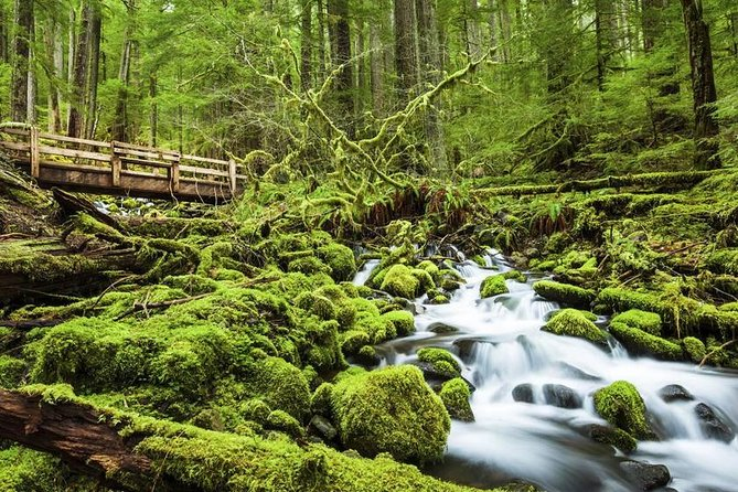 Full-Day Olympic National Park Tour from Seattle