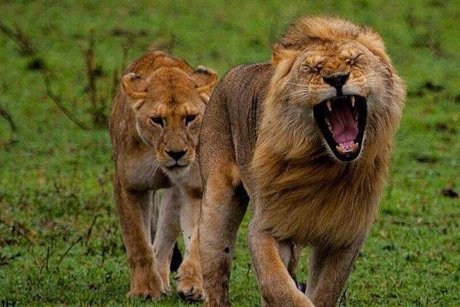 Tanzania Safari - The Great Migration in the North of the Serengeti and Lake Natron