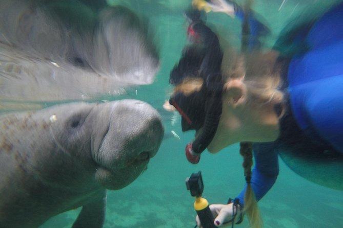 Private Manatee Snorkeling Tour