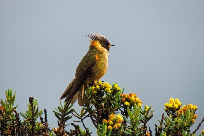 Observación de aves - Andes Centrales