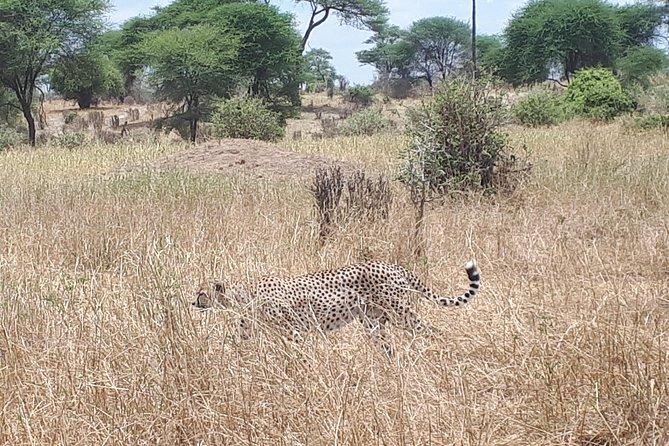 serengeti, ngorongoro & tarangire 4 days private tour