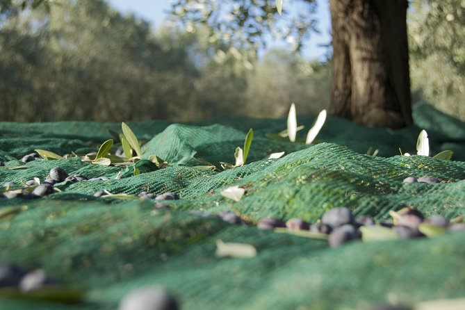 Olympia Shore Excursion: Ancient Olympia Plus Honey Farm & Olive Oil Tasting