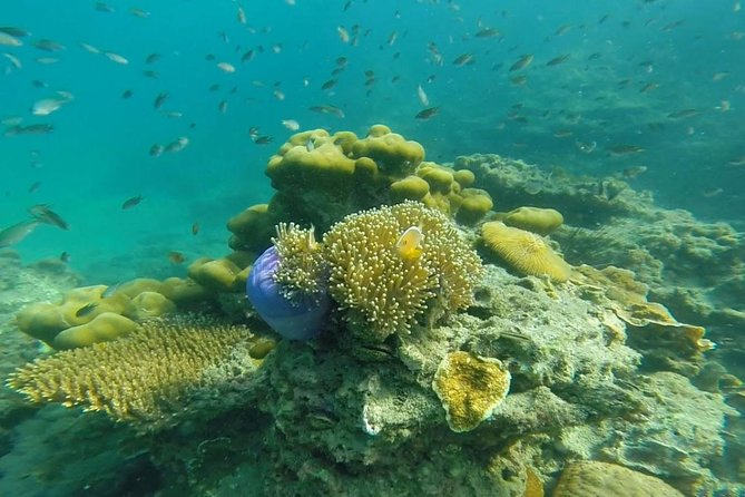 Snorkeling Tour to 4 Islands(Emerald Cave) From Koh Lanta by Speedboat