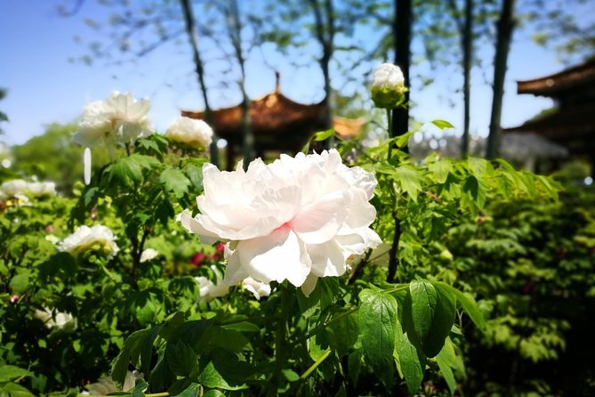 Luoyang Private Tour of Longmen Grottoes, White Horse Temple and Peony Blossom