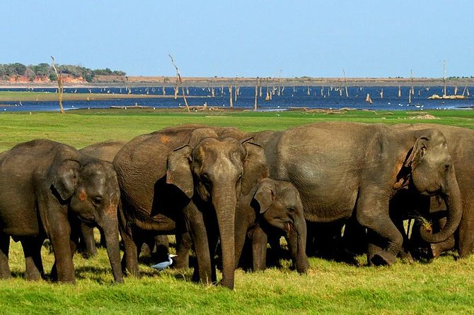 Minneriya Elephant Safari Tour