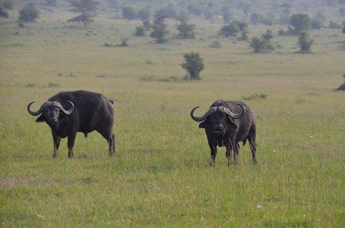 06 Days Kenya Big Five Luxury Safari