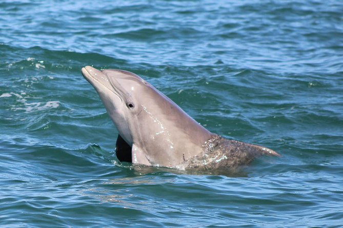 Dolphin and Wildlife Adventure of St. Augustine
