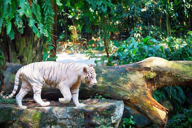 Full - Day Safari Experience - Zoo and River Safari