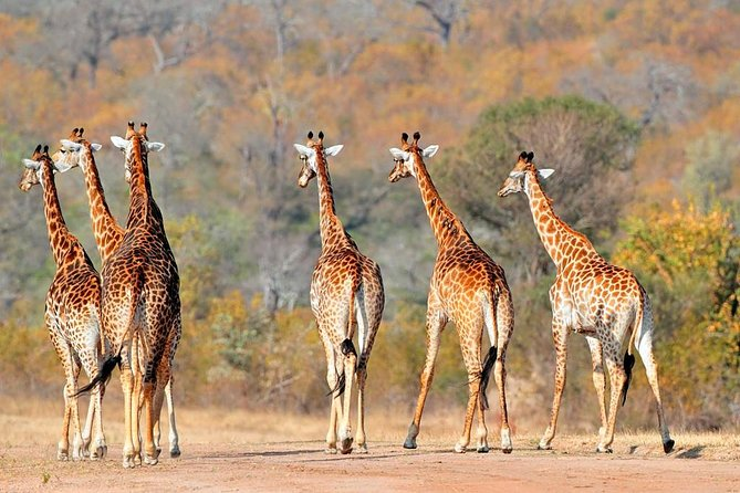 8 days /7 nights Mid Range Safari