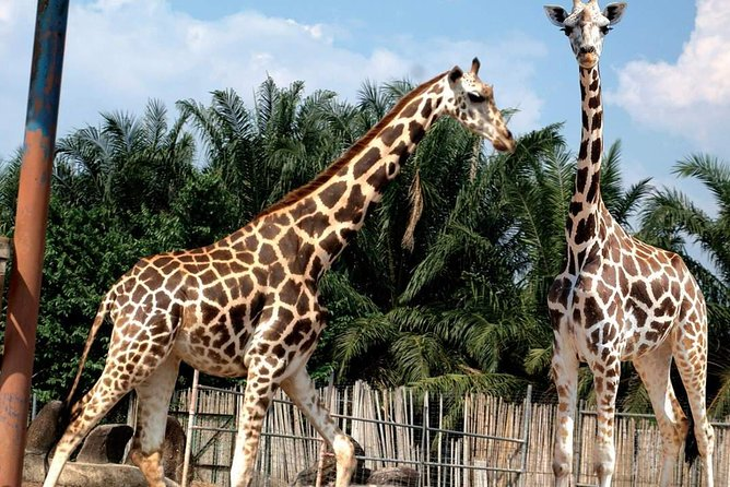 A'Famosa Safari Wonderland in Melaka Admission Ticket