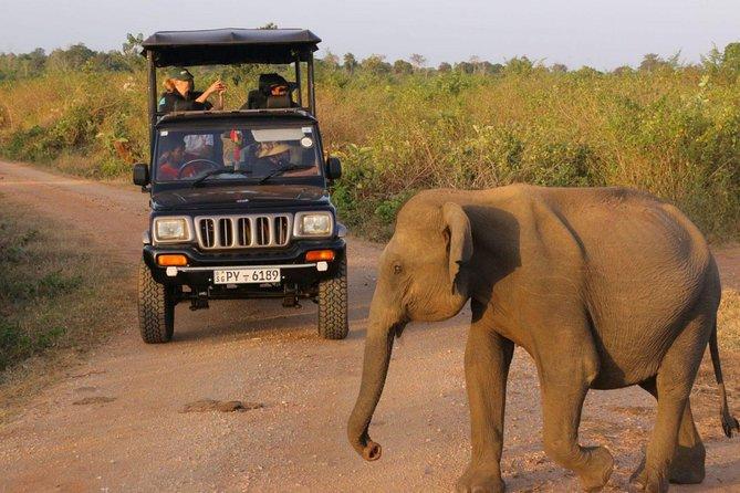 Afternoon Safari at Udawalawe National Park