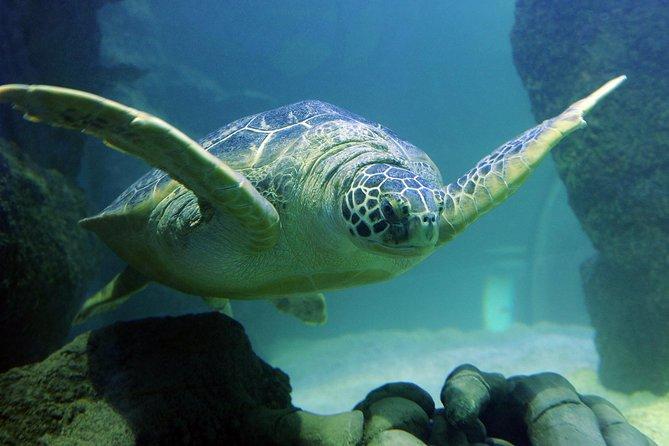 Sea Life Charlotte Concord Aquarium Admission Ticket
