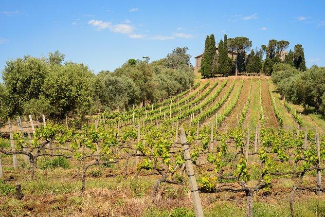 Private Vineyard Walk & Roman Wine Tastings