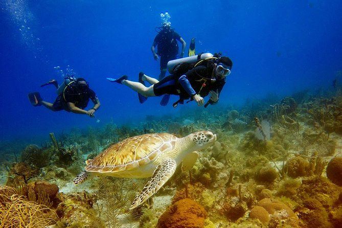 Saona Diving