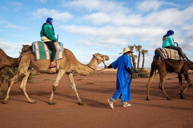 hur mycket kostar en kamel