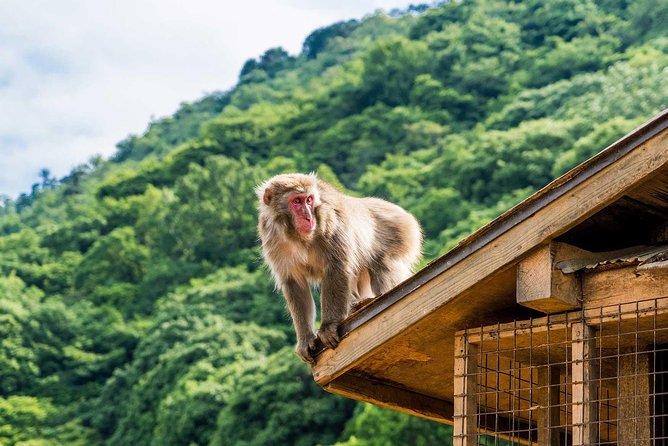 Afternoon Arashiyama Bamboo Forest & Monkey Park Bike Tour