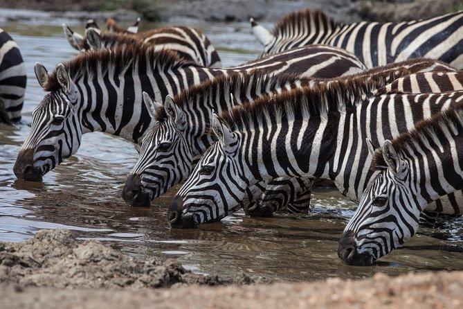 Introducing Kenya Safari Package