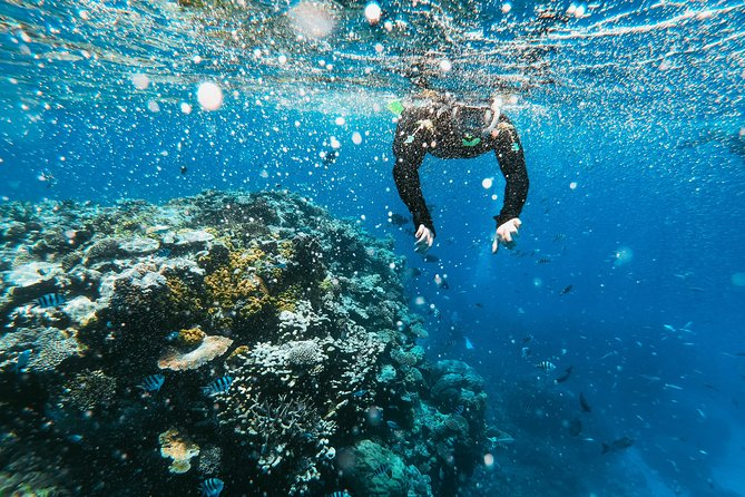 Snorkeling Adventure in La Jolla