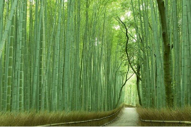 Kyoto Sagano Bamboo Grove & Arashiyama Walking Tour (No Yakatabune Lunch Cruise)
