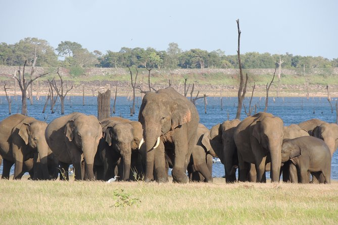 Kaudulla National Park Safari from Habarana