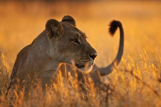 6 Days 5 Nights lodge safari Tarangire, Manyara, Serengeti & Ngorongoro Crater